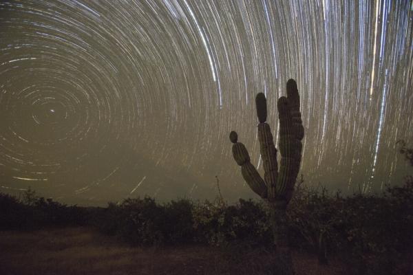 single baja cactus star stax